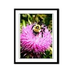 Bumble bee on Magenta Thistle Flower Framed Panel