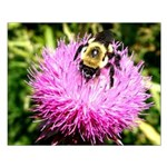 Bumble bee on Magenta Thistle Flower Posters