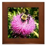 Bumble bee on Magenta Thistle Flower Framed Tile