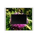 Bumble bee on Magenta Thistle Flower Picture Frame