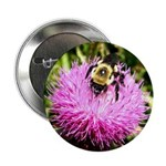 Bumble bee on Magenta Thistle Flower 2.25