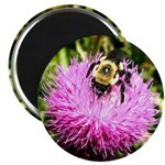 Bumble bee on Magenta Thistle Flower Magnet