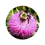 Bumble bee on Magenta Thistle Flower 3.5