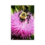 Bumble bee on Magenta Thistle Flower Rectangle Mag