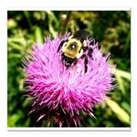 Bumble bee on Magenta Thistle Flower Square Car Ma