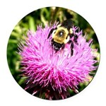 Bumble bee on Magenta Thistle Flower Round Car Mag