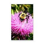 Bumble bee on Magenta Thistle Flower Rectangle Car