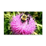 Bumble bee on Magenta Thistle Flower Car Magnet 20