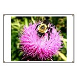 Bumble bee on Magenta Thistle Flower Banner