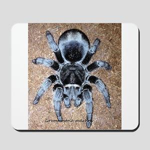 Brazilian Black Tarantula Mousepad