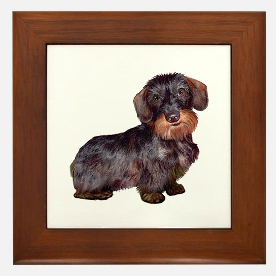 Wire Haired Dachshund (#1)q Framed Tile