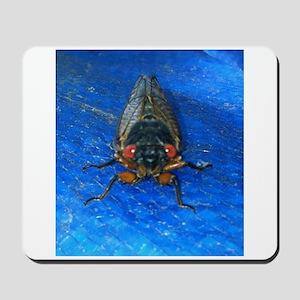 Cady- The Cicada Mousepad