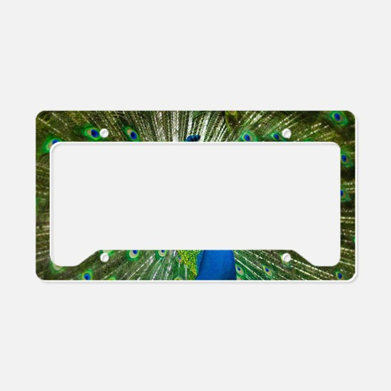 Unique Display License Plate Holder