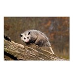 Opossum Postcards (Package of 8)
