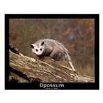 Opossum Small Poster