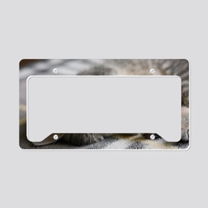Lying kitten License Plate Holder