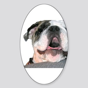 Bulldog Face Oval Sticker