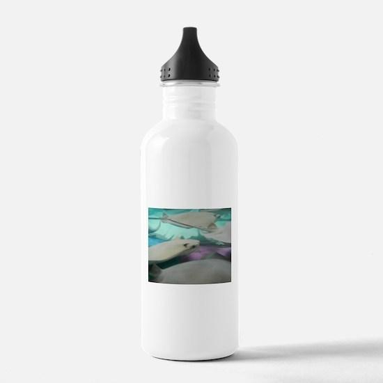 manta rays Water Bottle