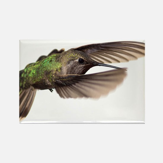 THE HUMMINGBIRD COLLECTION Rectangle Magnet