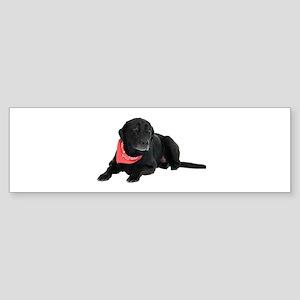 Black Lab Sticker (Bumper)