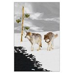 Wolves in Snow Large Poster