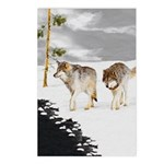 Wolves in Snow Postcards (Package of 8)