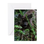 Young Buck Greeting Cards (Pk of 20)