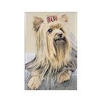 Yorkshire Terrier Rectangle Magnet (10 pack)