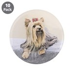 Yorkshire Terrier 3.5