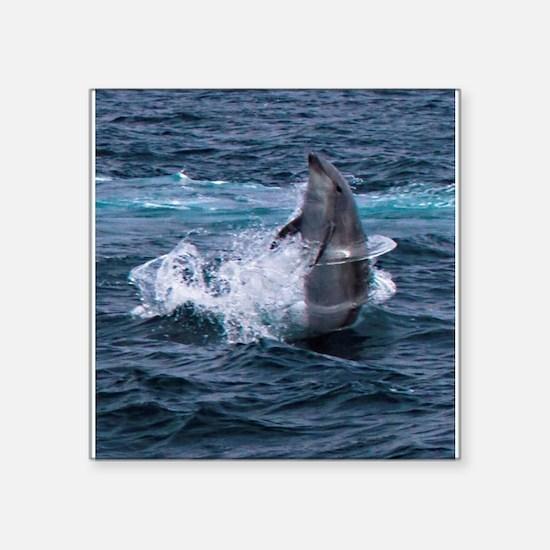 Hula-hoop Dolphin Sticker