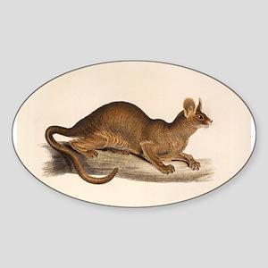 1835 Fossa Crytoprocta by Edwa Sticker