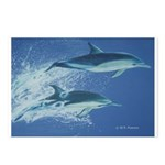 Leaping Dolphins Postcards (Package of 8)