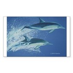Leaping Dolphins Rectangle Sticker