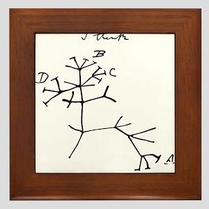 Darwin Tree of Life Black Framed Tile