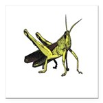 grasshopper Square Car Magnet 3