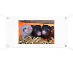 3 Little Pigs Banner