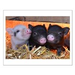 3 Little Pigs Poster Design