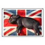 Micro pig chilling Banner