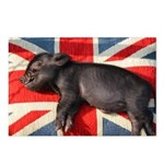 Micro pig chilling Postcards (Package of 8)