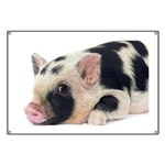 Micro pig chilling out Banner
