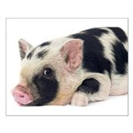 Micro pig chilling out Poster Design