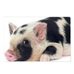 Micro pig chilling out Postcards (Package of 8)