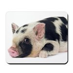 Micro pig chilling out Mousepad