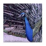 Art Tile Coaster - Peacock - Open Tail