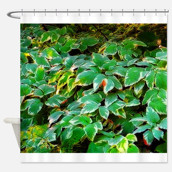 ivy on the ground Shower Curtain