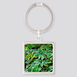 ivy on the ground Keychains