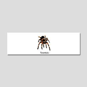 tarantula Car Magnet 10 x 3