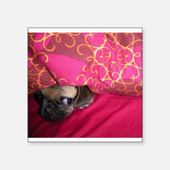 Sneaky Pug is Watching You Sticker