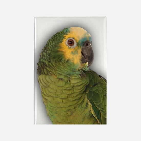 Amazon Blue Front Parrot Rectangle Magnet