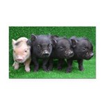 4 micro pigs in a row Rectangle Car Magnet